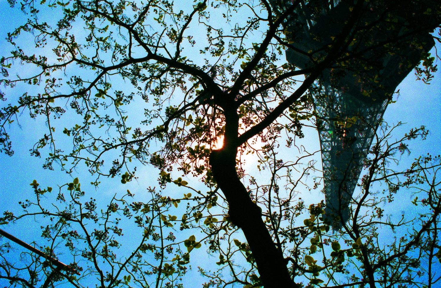- The Eiffel upside down tower. - Paris, eiffel tower - - art  - photography - by Tony Karp