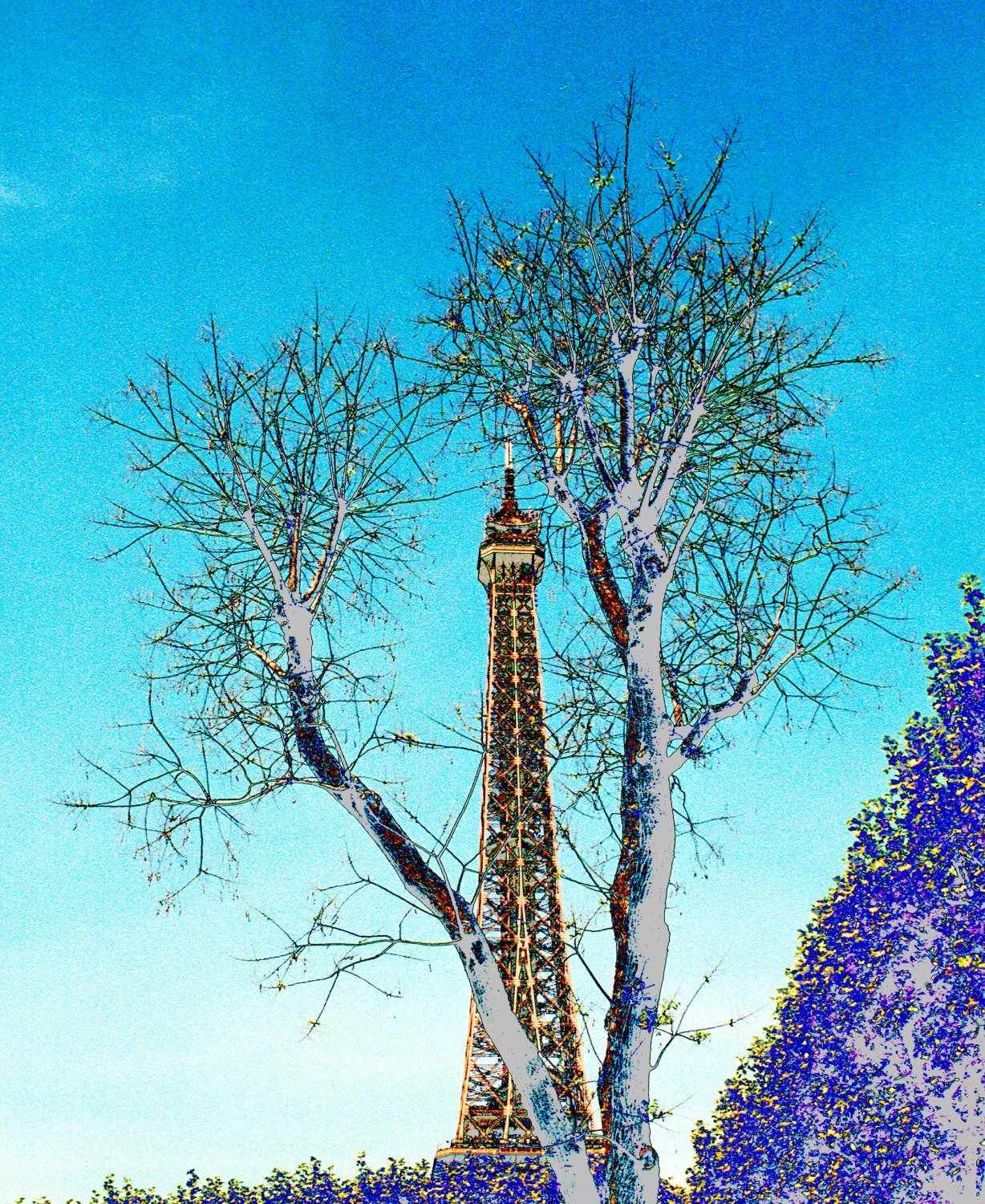 - The Eiffel Tower with trees. - Paris, eiffel tower - - art  - photography - by Tony Karp