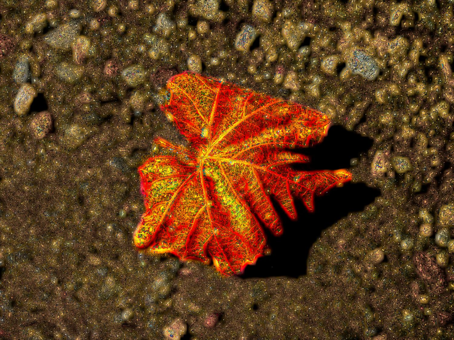 - A magical leaf on the road - Panasonic DMC-FZ28 - Tony Karp, design, art, photography, techno-impressionist, techno-impressionism, aerial photography , drone , drones , dji , mavic pro , video , 3D printing - Books -