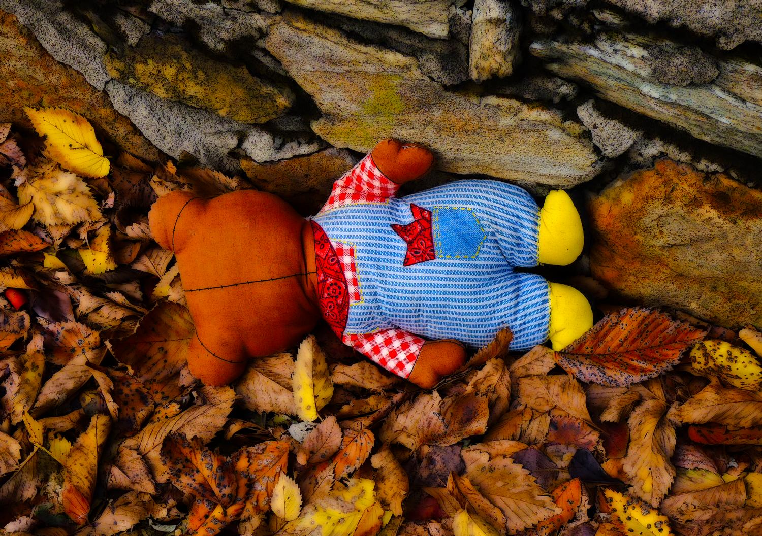stuffed bear in the leaves from the back  - Warrenton, Virginia-  Panasonic DMC-FZ35 - We found Mr. Bear in a pile of leaves along the road. - Tony Karp, design, art, photography, techno-impressionist, techno-impressionism, aerial photography , drone , drones , dji , mavic pro , video , 3D printing - Books -