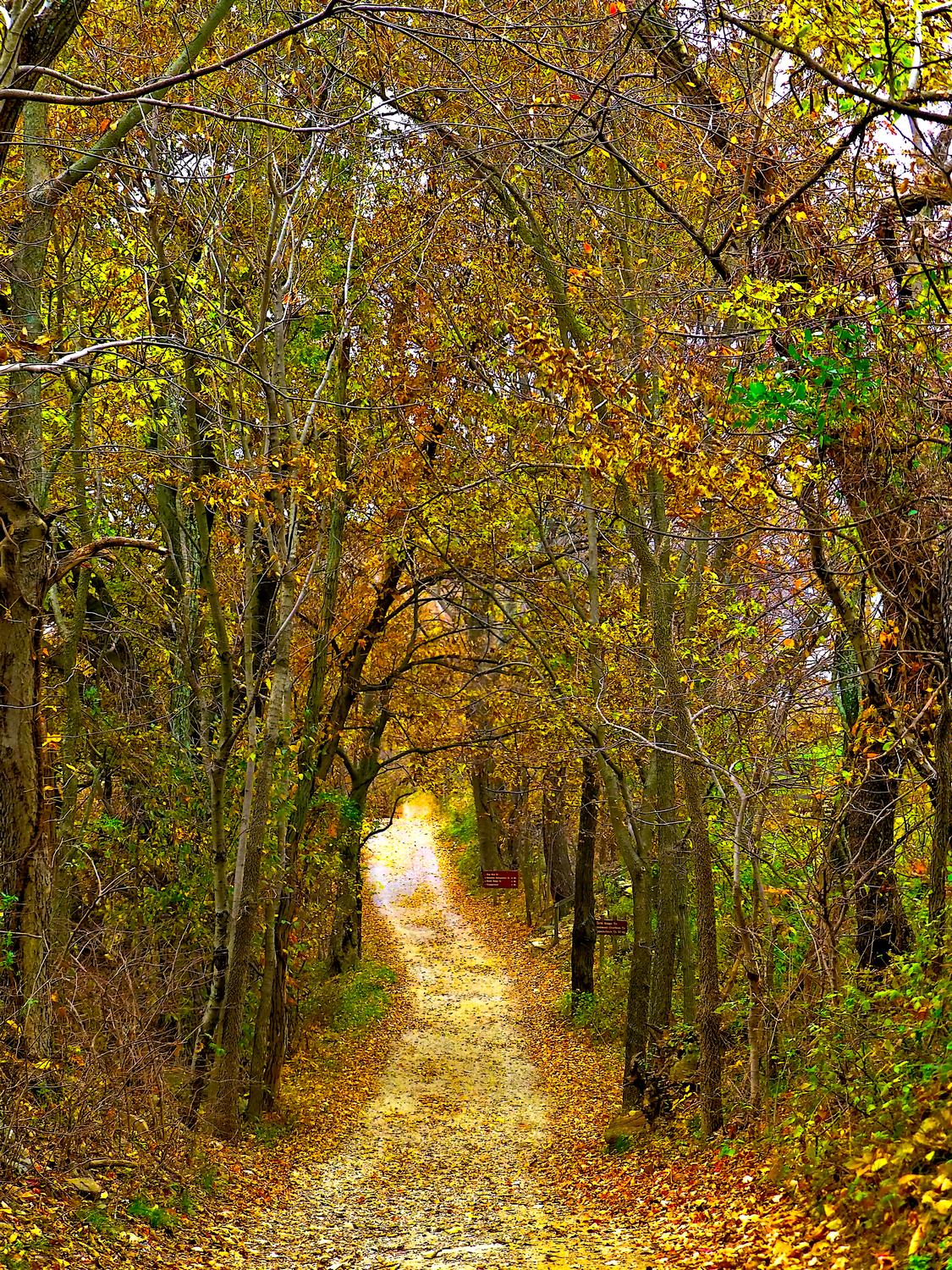 - A little further down the trail that leads to the big hill <br>--- Click to see ORIGINAL --- - Sky Meadows State park - Virginia - Cows - Panasonic DMC-ZS20 - Tony Karp, design, art, photography, techno-impressionist, techno-impressionism, aerial photography , drone , drones , dji , mavic pro , video , 3D printing - Books -