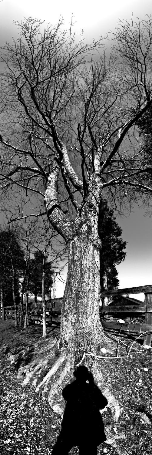 -  Self portrait in a vertical tree panorama. - Panasonic DMC-ZS40, DMC-ZS50, DMC-LF1 - Tony Karp, design, art, photography, techno-impressionist, techno-impressionism, aerial photography , drone , drones , dji , mavic pro , video , 3D printing - Books -