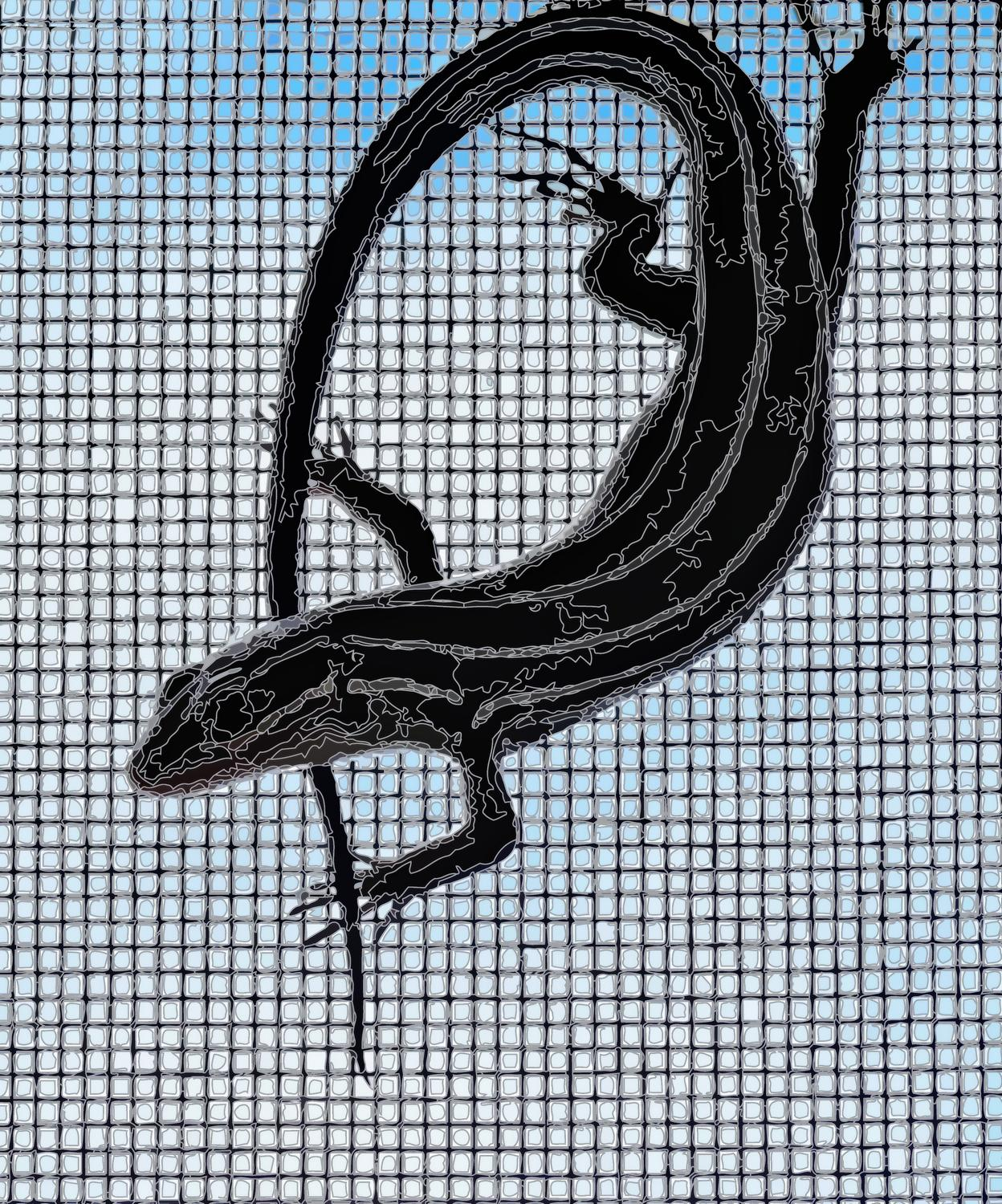 - Here's the skink, rendered into PostScript,<br> and now just lines and shapes. - Leica C (typ 112) - Panasonic DMC-LF1 - five-lined skink - - - art  - photography - by Tony Karp